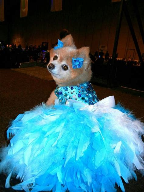 puppy dresses dress wedding turquoise bling satin feather harness aqua blue turquoise