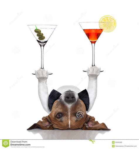 cocktail dogs cocktail stock photo image 35055390