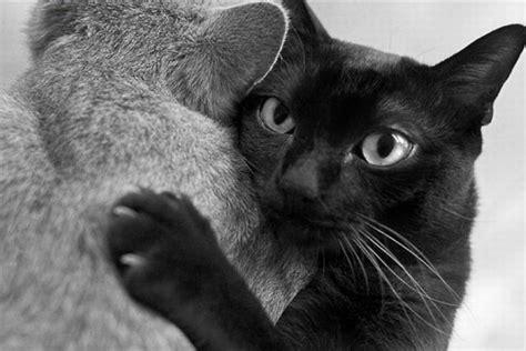 cat hugs cat hug 2 1funny