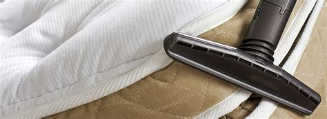 how to avoid bed bugs how to prevent bed bugs from biting ehrlich pest control