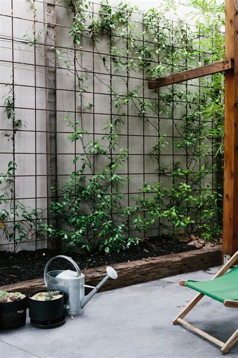 climbing plants for walls climbing screens and mesh on