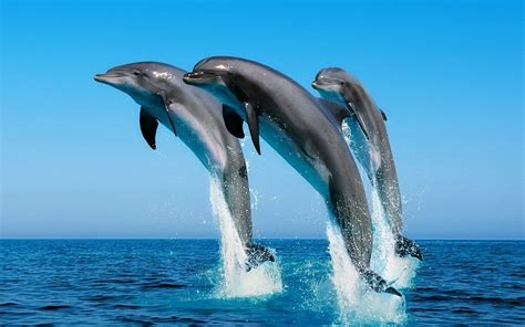 dolphin android dolphin wallpaper android wallpaper wallpaperlepi
