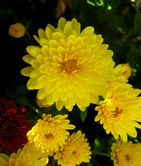 piruja este blog es el antiguo por favor ir al nuevo el datoonz com tipos de plantas hermosas v 225 rias id 233 ias de