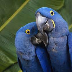 beautiful types of parrots curious funny photos pictures