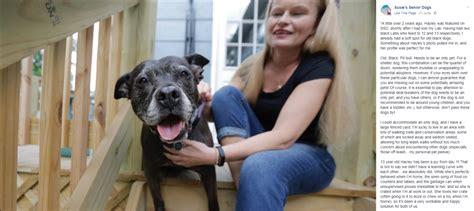 susies senior dogs les avantages d adopter un chien adulte gublog gudog fr