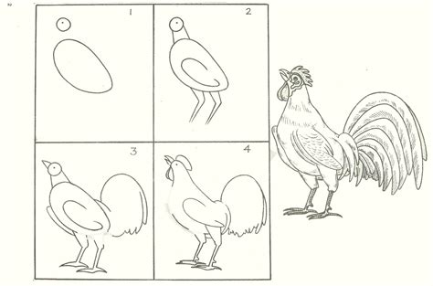 Drawing Step By Step Easy Animals by Studentsdrawing Animal Step By Step Easy Outline Drawing