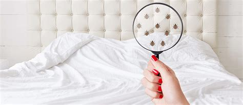 home remedies   rid  bed bugs top natural mattresses