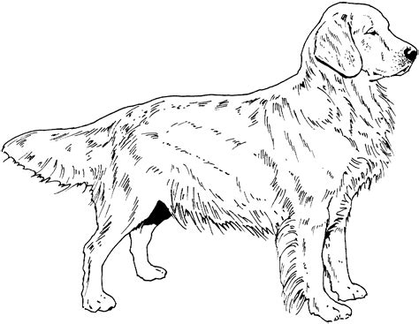Golden Retriever Coloring Page breed coloring pages