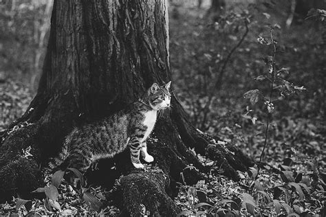 pictures of and lovely pictures of cats in black and white 20 fubiz media