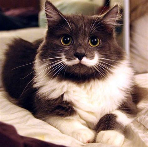 11 Adorable Dog and Cats with Mustaches   The Trupanion Blog