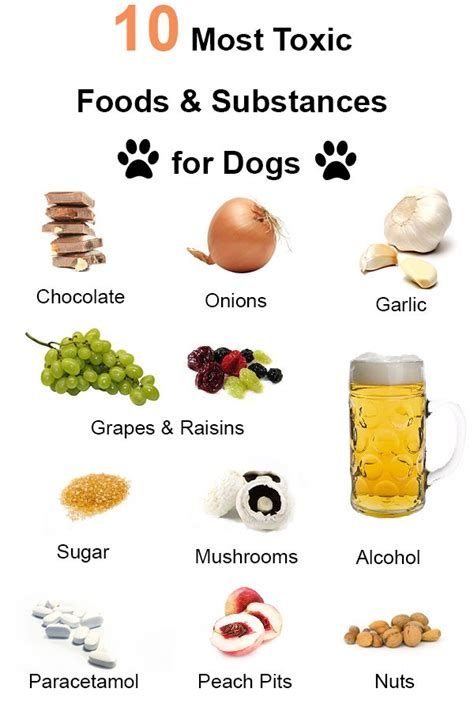 is garlic poisonous to dogs 17 best ideas about toxic foods for dogs on