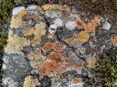 rock glorious monadhliath mountains obsessedbynature