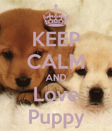 keep calm and puppies keep calm and puppy poster keep calm o matic