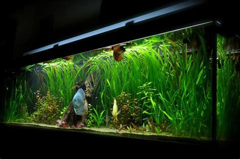 aquarium 600l discus plant 233 e