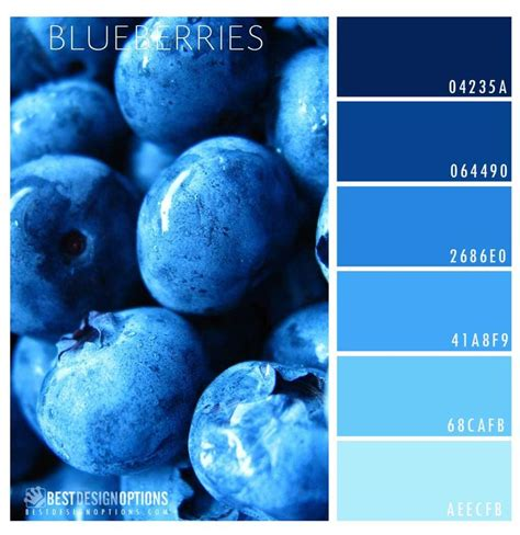 what color are blueberries 417 best images about blueberries maine recipes on