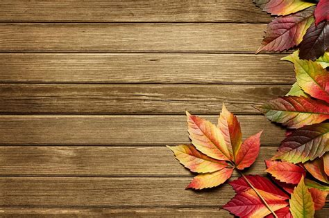 Autumn Background Powerpoint Backgrounds For Free Fall Powerpoint Backgrounds