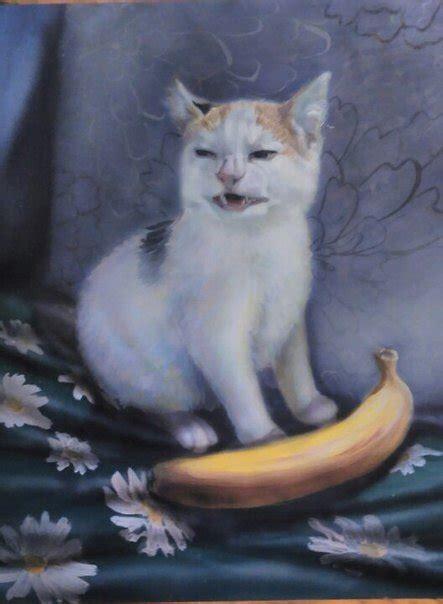 banana kitten named orfey cats cat no banana dank memes amino