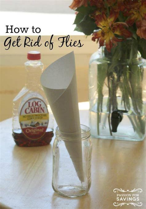 kill house flies how to get rid of flies in your house