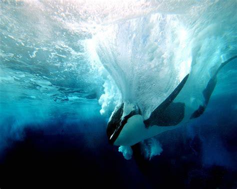 imagenes fondo de pantalla animales imagen zone gt fondos de pantalla gt animales marinos fondo