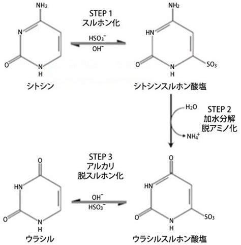 Biology Plus Mba by Dnaメチル化変換キットシリーズ バイサルファイト試薬 Bisulfite 変換法によるメチル化dnaの分析