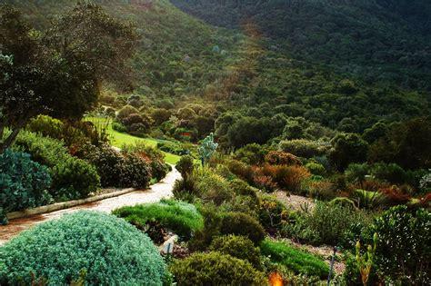 Garden Mountain by Panoramio Photo Of Kirstenbosch National Botanical