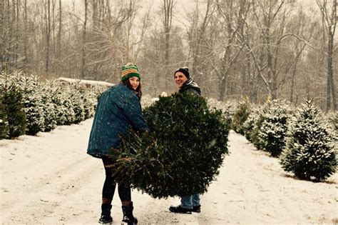 best christmas tree farm in nj best tree farms near nyc where to get a tree in nj ct more thrillist