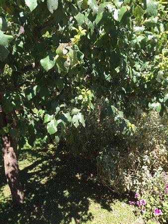 giardino segreto pienza il giardino segreto b b pienza provincia di siena