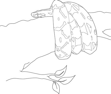boa constrictor page coloring pages
