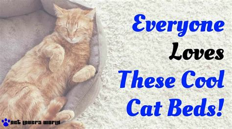 cool cat beds find out why everyone loves these cool cat beds pet lovers world
