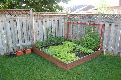 Backyard Tomato Garden by Trellising Tomatoes Northstory