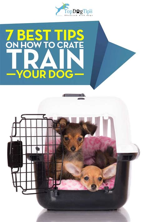 crate your puppy 7 tips for crate your and how to do it right