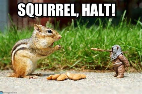 Chipmunk Meme - squirrel vs ewok meme http www memegen com meme zqgnrl