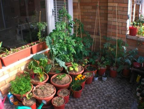 balcony vegetable garden