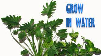 small plants to grow indoors grow indoor plants in water for years