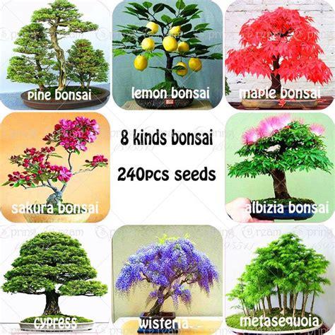 Bibit Bonsai Maple 642 best bonsai images on gardening beautiful
