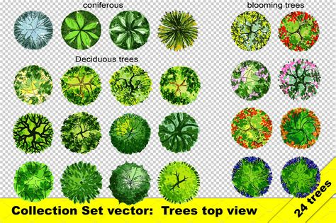 set of top view trees vector and png objects creative