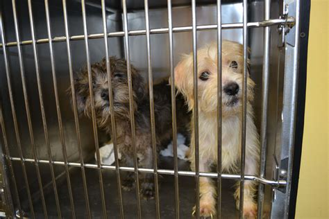 humane society for dogs image gallery humane society dogs