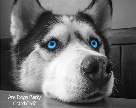 is dogs color blind is it true that dogs are colorblind dogvills