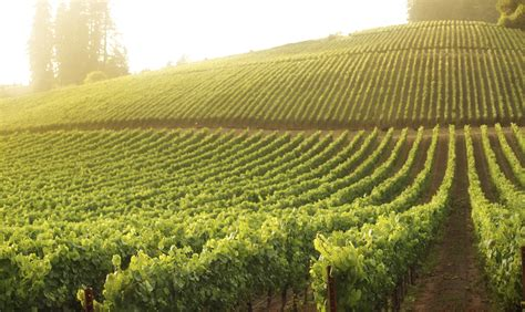Park Mba Finance by Prominent Finance Professionals Join Roster At Wine
