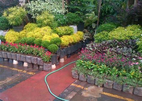 Bibit Alpukat Yogyakarta jual tanaman hias di yogyakarta jual bibit tanaman