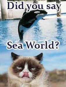Grumpy Cat Memes Clean - grumpy cat meme grumpycat grumpy cat pinterest cats cat memes and haha