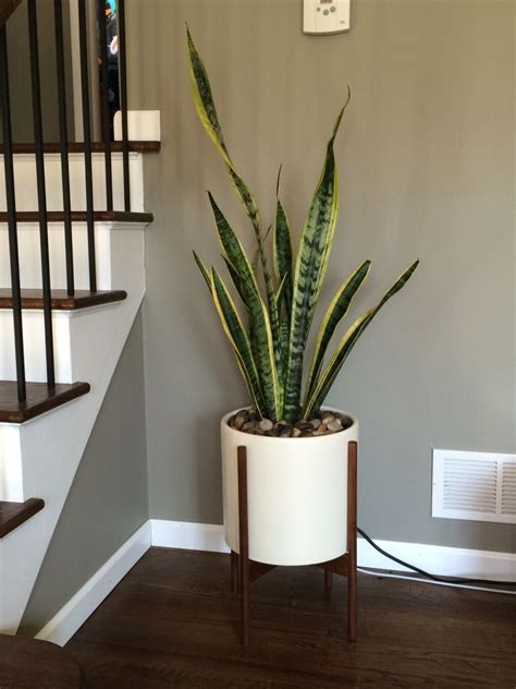 drag  resize plants  indoor plants indoor plants