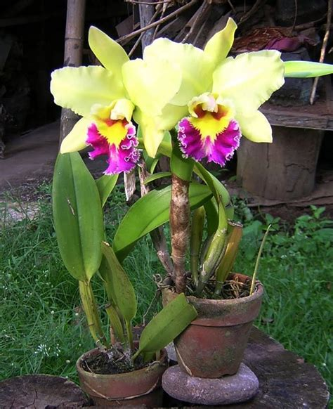 496 best images about potted orchids on