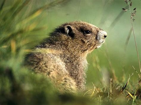 groundhog day hd 1000 images about groundhogs on in pictures