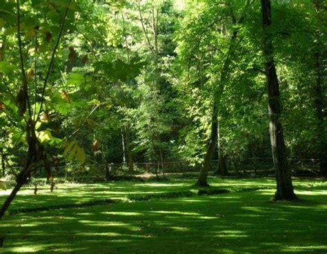 imagenes de paisajes verdes para pantalla paisajes naturales verdes imagui