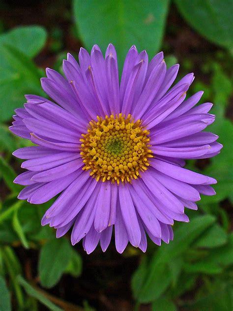 summer flowers w w nursery landscaping 9 easy summer flowers