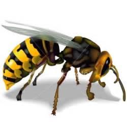 Madu Odeng Dan Lebah Hutan lebah madu 171 propolismadulebah