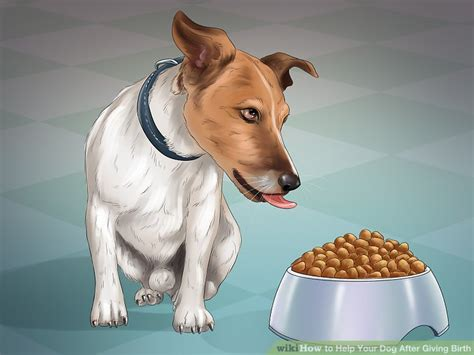 puppies giving birth how to help your after giving birth with pictures wikihow