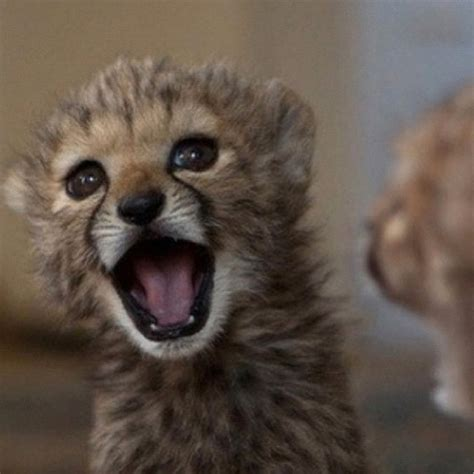 imagenes de animales graciosos y tiernos imagenes de animales muy tiernos