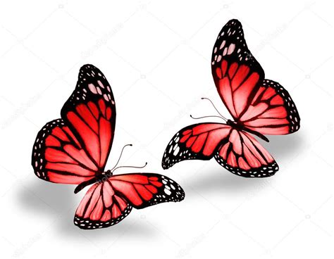 imagenes de dos mariposas juntas two red butterflies stock photo 169 sun tiger 42490931